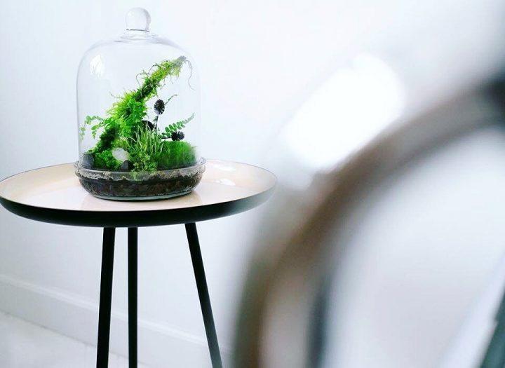 leśny ekosystem, egzystujący na codzień w prostym, eleganckim szklanym słoju