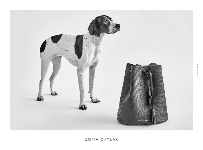 chylak-dogs-2016-press-02