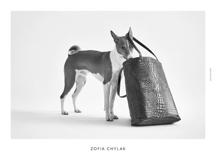 chylak-dogs-2016-press-05
