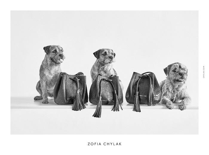 chylak-dogs-2016-press-07