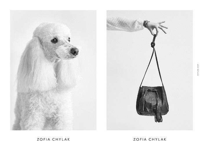 chylak-dogs-2016-press-08