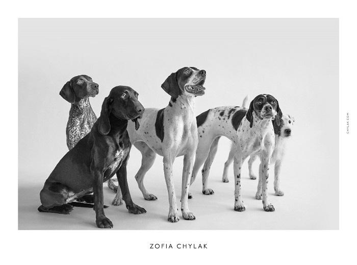 chylak-dogs-2016-press-09