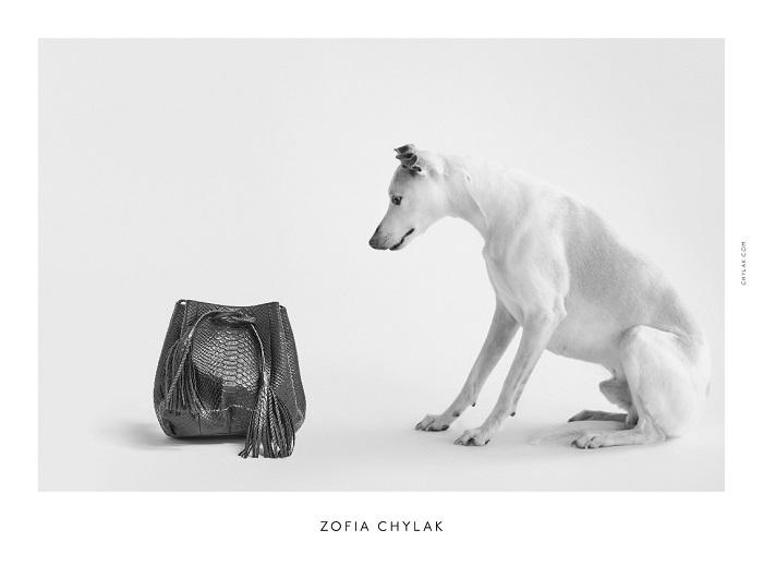 chylak-dogs-2016-press-11