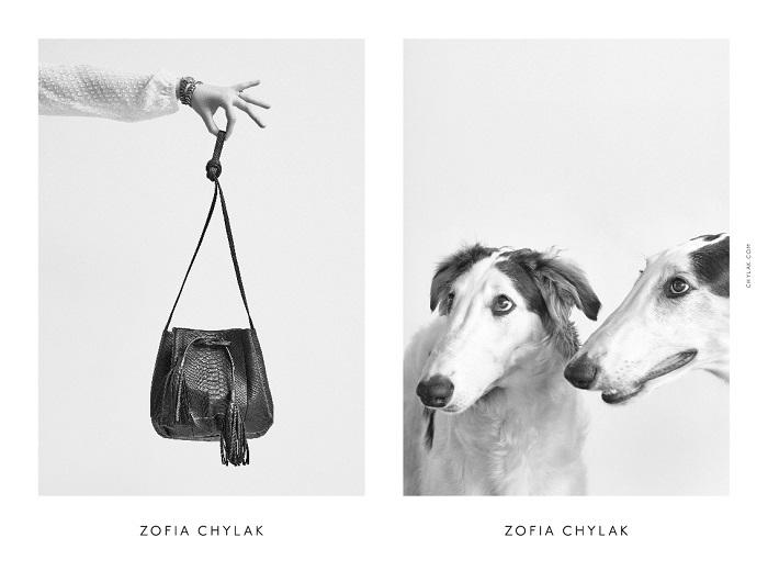 chylak-dogs-2016-press-14