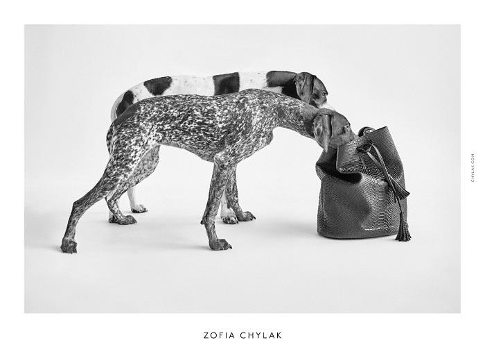 chylak-dogs-2016-press-15